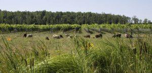 210512 InfoBio HC Southbrook Vineyards - Image 4