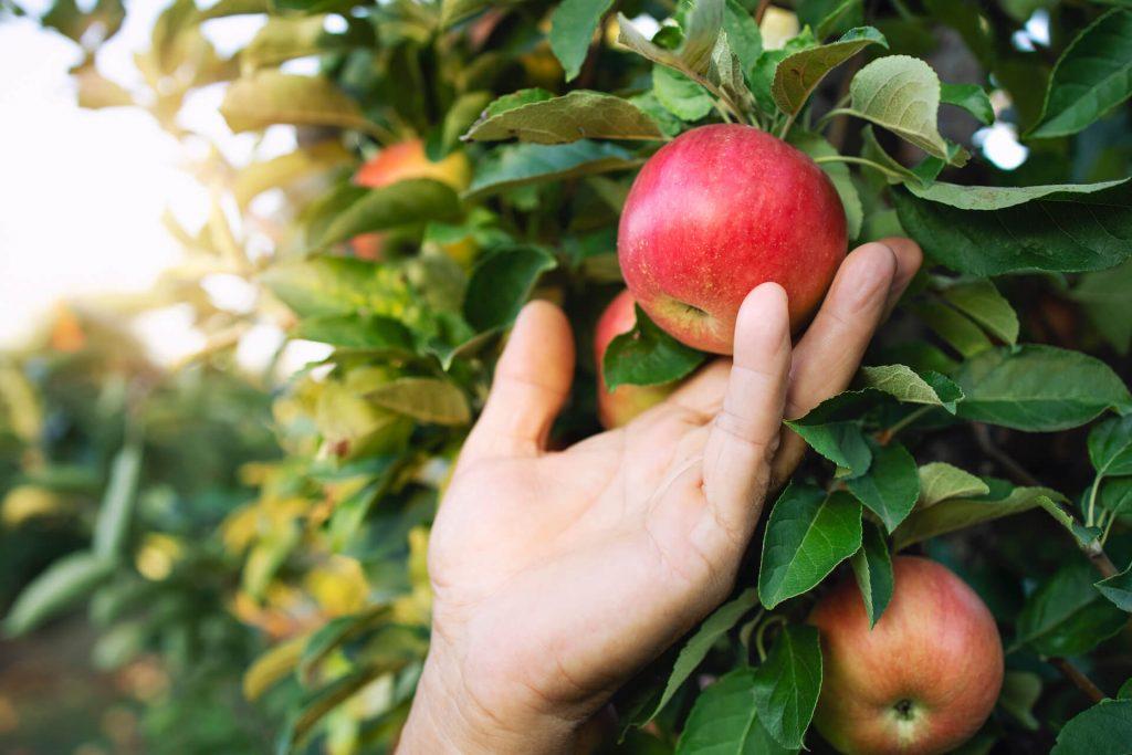 Organic Production in Canada - Organic Federation of Canada